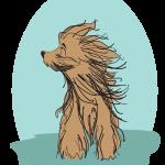 Blowdry dog