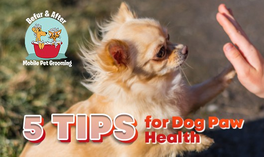 Cute tan chihuahua giving high five for 5 Dog Paw Health Tips