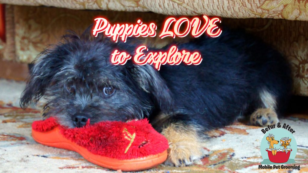 cute black puppy chewing on red slipper