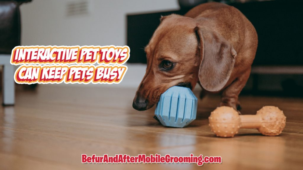 playing dog biting toys